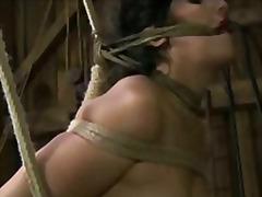Etichete: sclavi, dominare sexuala, fetish, sex fara preludiu.