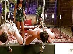 Etiquetes: dominació-submissió, dones dominades.